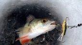 Зимняя рыбалка на окуня на балансир. Выбор снасти и основы игры.