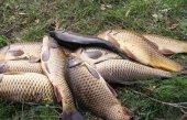 Особенности рыбалки на карпа в летний период