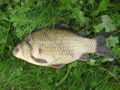 Рыбалка летом на карася на удочку