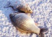 Рыбалка зимой на карася. Выбор мормышки и поиск места стоянки.