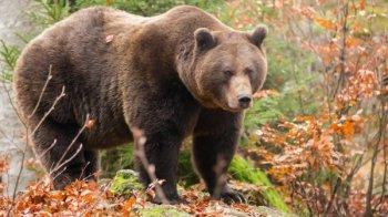 Особенности охоты на медведя